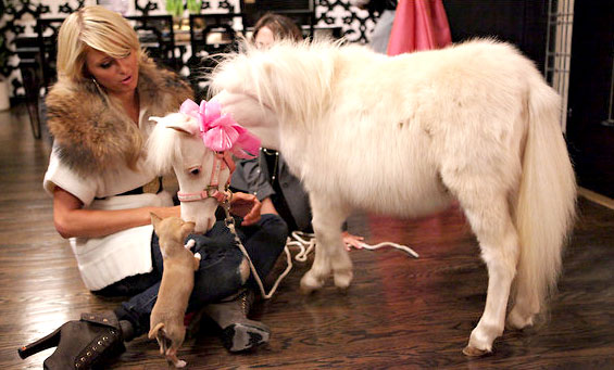 Paris Hilton promoting her new reality show with a mini horse